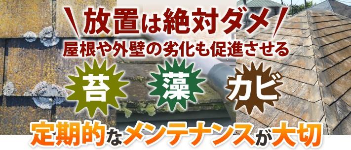 放置は絶対ダメ!屋根や外壁の劣化を促進させる苔・藻・カビ