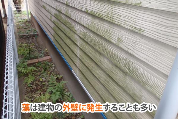 藻は建物の外壁に発生することも多い