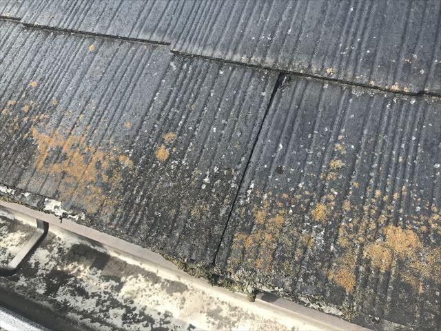 スレート屋根の軒先の苔