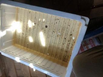 屋根裏に置いた発泡スチロールの箱