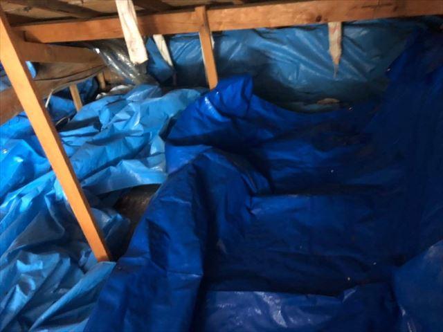 屋根裏に敷かれたブルーシート