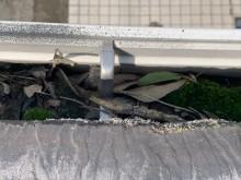 雨樋の落ち葉やコケ