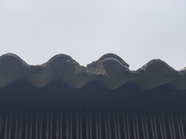 波板スレート屋根苔