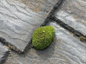スレート屋根の苔