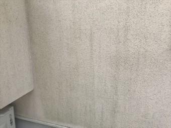 モルタル外壁のカビ