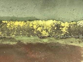 シート防水に生えた苔
