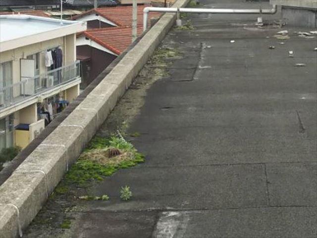 屋上に生えた雑草