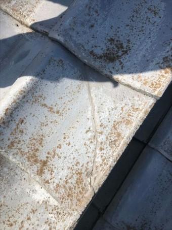 セメント瓦のコケ